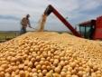 Novedades impositivas agropecuarias
